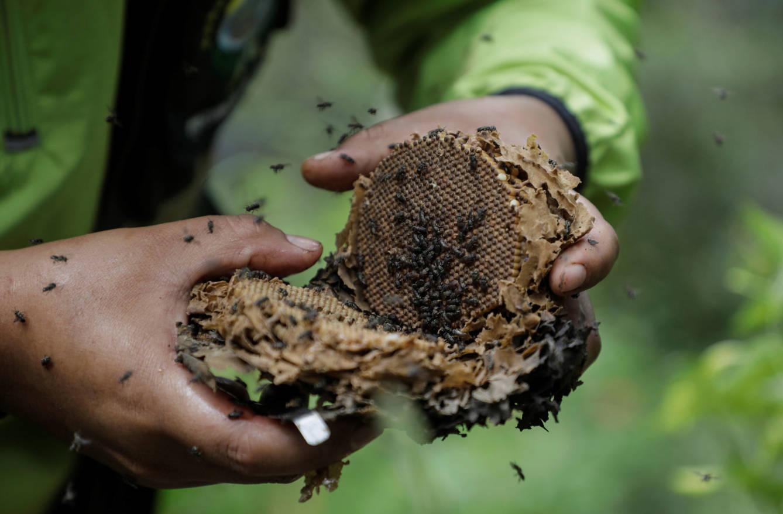 Beekeepers incur losses of 120,000 euros (Reuters / David Mercado)