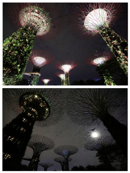 The artificial tree-shaped structures called Supertrees, before (above) and after lights out at Gardens By the Bay in Singapore