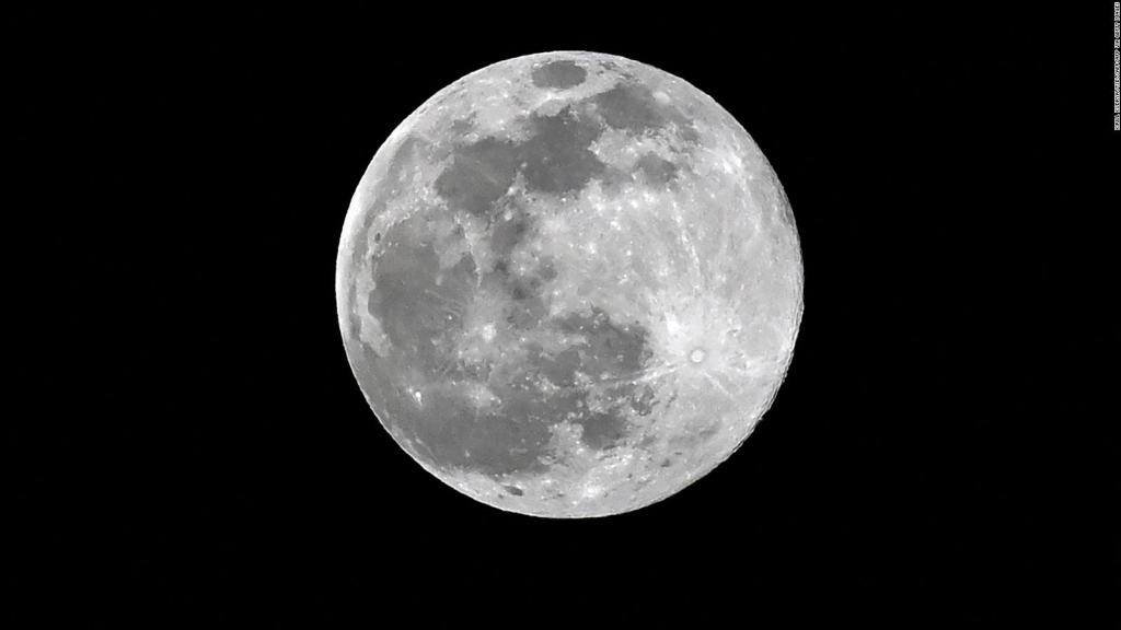 "Seeking the British space agency ""Moon trees"""