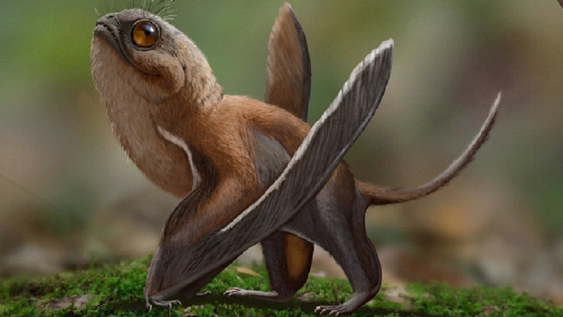 Scientists have discovered an exotic flying dinosaur that looks a lot like Porgs' Star Wars game