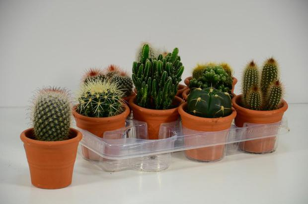 The ability to open or close the respiratory gates of the plants allowed them to adapt to both internal and external conditions, such as the availability of external gas or excess internal gas, or to prevent dehydration, as is the case with aloe vera.