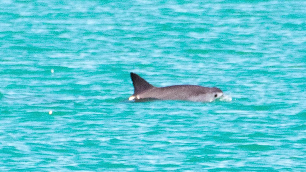 Fishing areas closed in the home of Vaquita Marina