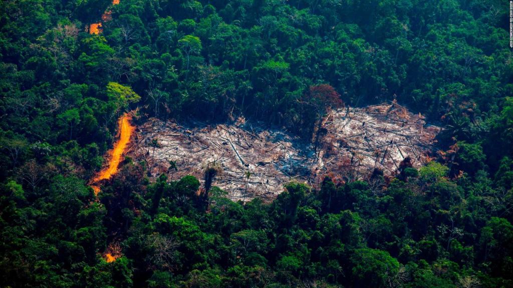 Amazon Carbon Alert