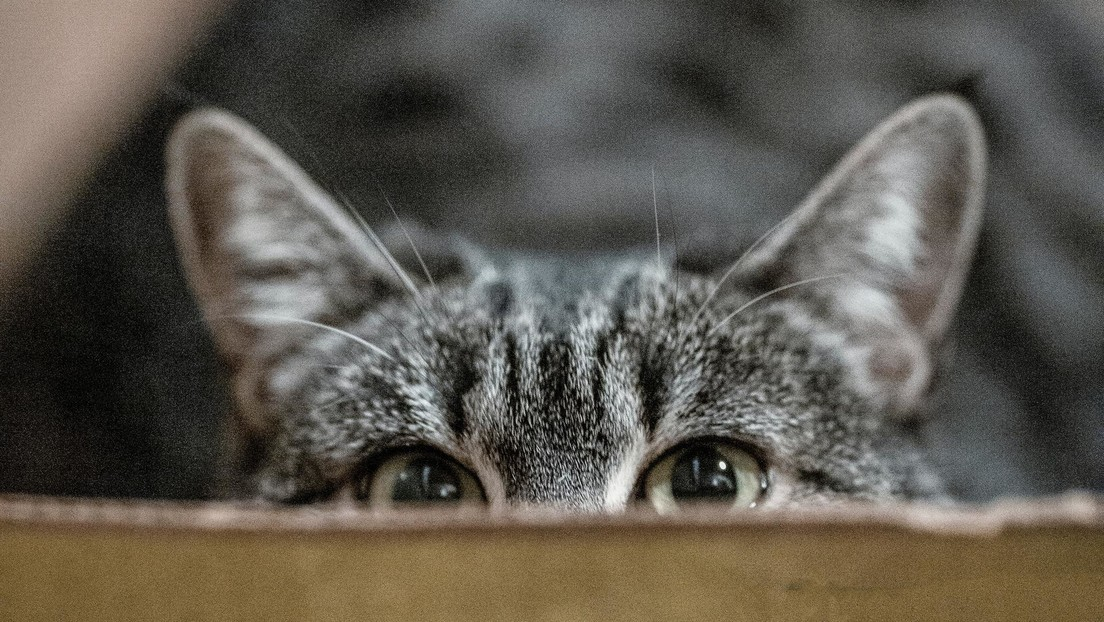 Study warns cats are highly effective killing machines
