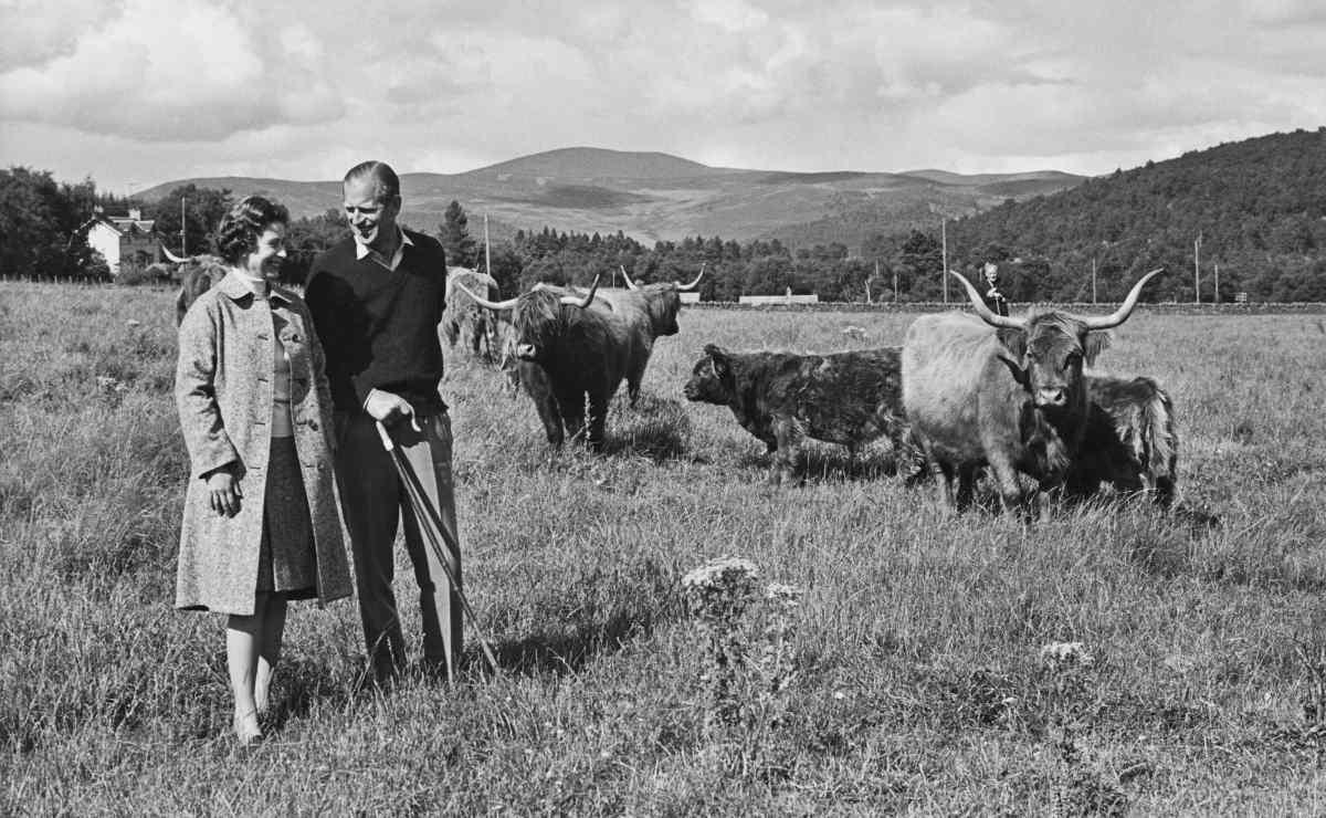 Queen Elizabeth II, Prince Philip, cows